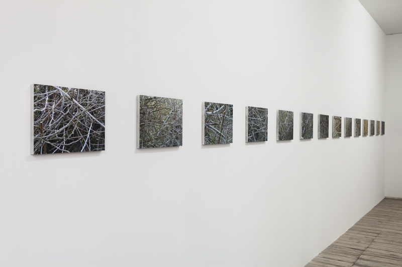 Hinrich Weidemann Underbrush Exhibition View